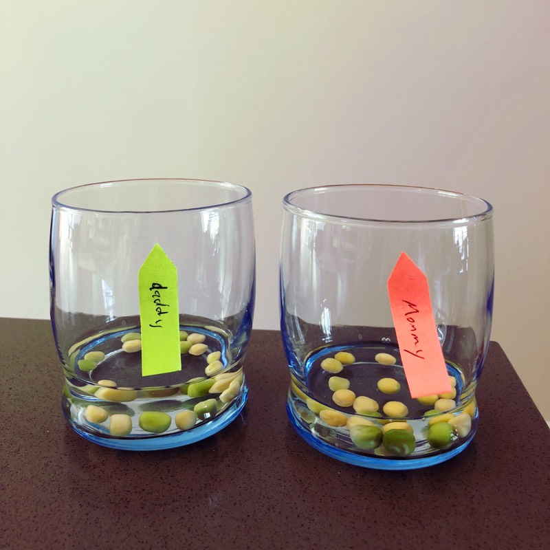 """Two glasses with water and pea seeds in each labeled """"mommy"""" and """"daddy."""""""