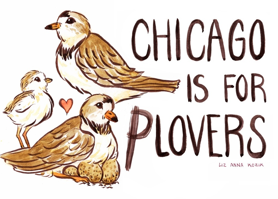 "Art depicting two piping plovers, one chick, and a nest with the text ""Chicago is for Plovers"""